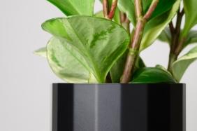 Flowerpot Froller